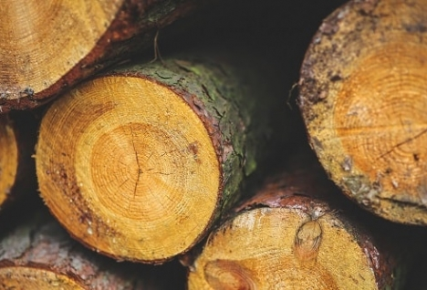 wooden logs in a pile
