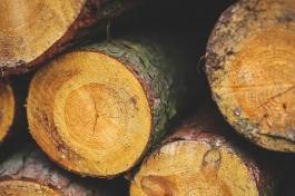 odun kütükler