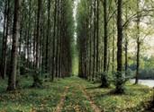FSC-trees-